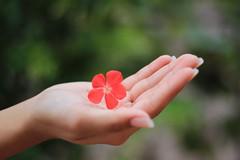 Red. (Arista_Imaging) Tags: pink flower love 50mm holding bokeh palm bokeholic