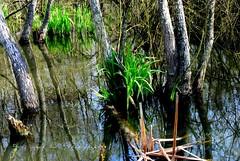 Pond (Angelo Nori) Tags: italy lake roma nature landscape pond nikon italia natura lazio laghetto nettuno drawingwithlight laghi disegnareconlaluce nikond3000 nikonclubit angelonori