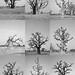 Baobab collage