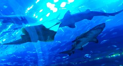 IMG_0920 (shirokami85) Tags: white black animals penguins dubai sony sharks fishes burj rx100 khaleefa