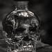 För evigt... äldsta kända kraniet är >150000 år gammalt
