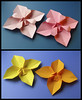 Fiore Quadrato E Variante 1 - Square Flower And Variant 1