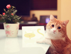 where is my date? =**= (kennymuz) Tags: pink portrait orange pet white house flower animal rose cat table for kitten feline waiting little kitty pot domestic card dinning date chubby skippy jonjones ghibi