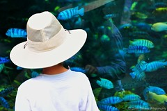 Fish Watching (Scottwdw) Tags: africa travel vacation woman white fish reflection hat zoo aquarium orlando nikon florida waltdisneyworld disneysanimalkingdom panganiforestexplorationtrail d700 scottthomasphotography afsnikkor28300mmf3556gedvr