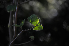 out of darkness (pete ware) Tags: light sunset leaves dark spring spotmetering nikond90 darlandbanksnaturereserve peteware nikon55300dxvr