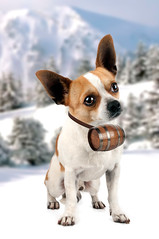 chihuahua with a rescue barrel (Francis Jimnez Meca) Tags: blue winter sky rescue cliff dog white mountain snow chihuahua alps nature animal bernard rock vertical fur mammal switzerland funny europe outdoor swiss large canine glacier alpine shock keg