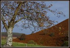 Autumn (WayShare) Tags: autumn tree valley bracken hillside cwm chwefri