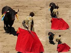 preparando una tanda (aficion2012) Tags: ceret 2016 novillada corrida toros bulls bull fight novillos france francia d mario y hros de manuel vinhas abel robles collage torero matador novillero