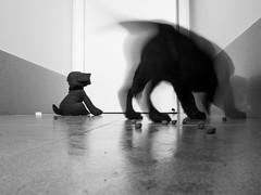 Still life! (TonyinAus) Tags: puppy blackandwhite monochrome stilllife canon