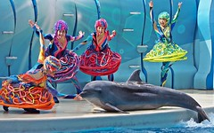 Millenie (EmilyOrca) Tags: dolphin aquarium cetacean show stage slide landing body pool water marine mammal