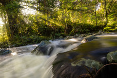 Waima River (CadePerry) Tags: waima river northland nz winter hokianga forest bush landscape water running green trees nature sun beams