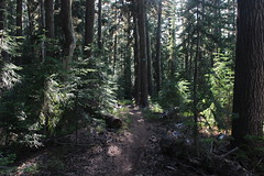 Beautiful trail (rozoneill) Tags: maiden peak trail waldo lake pacific crest oregon hiking willamette pass gold skyline odell butte volcano forest eugene