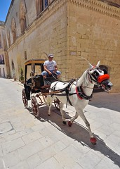 A handsome carriage (jeremyhughes) Tags: coach carriage cart buggy horse horsedrawn horsepower malta mdina transport tourist tourism oldschool vintage historic red tack reins hooves nikon d750 nikkor 20mm 20mmf28d wideangle superwide fortress crenellations architecture flagstones equine