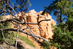 Tree (nick.amoscato) Tags: west03 west03bryce mossy cave trail bryce national park utah