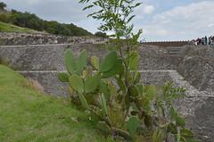 DSC_7781p (Milan Tvrd) Tags: cholula mxico puebla pyramide zonaarqueolgica