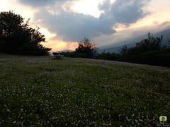 Le soleil se couche sur les pquerettes (Ath Salem) Tags: algrie bouira lakhdaria montagne chasse verdure fort coucher de soleil sunset algeria beaut nature randonne promenade valle nuages