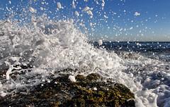 Sea bubbles (Howard Ferrier) Tags: oceania rock plants pacificocean shelleybeach splash droplets waves seq seaweed ocean sunshinecoast sea coralsea algae closeupview australia caloundra water queensland flora vegetation elements materials