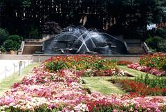 Civic Park Fountain, Newcastle, NSW, January 1989 (Coalfields Heritage Group) Tags: civicparkfountain fountains figtrees civicpark newcastlensw newcastle coalfieldsheritagegroup percysternbeckcollection nsw australia book22 sternbeckbk220189c009