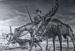 Don Quixote and Moose (bw) (Michael F. Nyiri) Tags: california southerncalifornia anzaborrego desert ricardobreceda art sculpture metalsculpture temeculacalifornia
