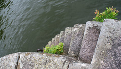 stairs (helena.e) Tags: helenae sjtorp lga husbil motorhome semester vacation vnern lake sj vatten water trappa stair
