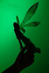 [38 - 52X] - Contraluz (Marmotuca) Tags: cuarto 52x campanilla peterpan nuncajams contraluz verde hada fair cuento