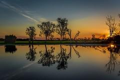 Reflections of Kakadu (BlueberryAsh) Tags: darwin kakadu yellowwaters southalligatorriver reflection australia river gumtrees landscape outdoors sunset sunsetcruise d750nikon nikon24120 stormscloudssunsetsunrise