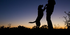 Dancing (anthonyhelton.com) Tags: dogs canon labrador mark iii retriever chocolatelab 5d mansbestfriend samantha