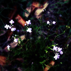 Little Lights in the Dark (hollykl) Tags: flowers light abstract photomanipulation square weed digitalart hypothetical arteffects sharingart awardtree