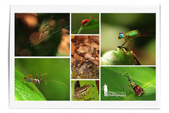 Borneon Rainforest collections (Ringgo Gomez) Tags: 1001nights nikon105mm macroextreme macrolicious malaysianphotographers elitephotography macromarvels macrolife nikond700 sarawakborneo corcordians 1001nightsmagiccity mygearandme