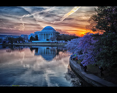 Cherry Blossom Sunrise at the Jefferson Memorial (Sam Antonio Photography) Tags: city morning travel flowers light sunset sky orange usa flower reflection building history monument water yellow horizontal architecture sunrise landscape outdoors photography washingtondc democracy washington memorial day symbol president politics illuminated dome bloom cherryblossom northamerica government series cherryblossoms column multicolored sunbeam jeffersonmemorial thomasjefferson scenics springtime gettyimages distant tidalbasin vibrantcolor cherryblossomfestival travelphotography capitalcities traveldestinations colorimage famousplace usatravel nationscapitol americanculture buildingexterior nationallandmark internationallandmark nothdr viewintoland builtstructure cherryblossomswashingtondc canoneos5dmarkii incidentalpeople samantonio canon24105f4lens samantoniophotography washingtondcphotolocations cherryblossoms2013 jeffersonmemorialsunrise