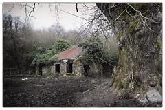 Deserted (Frank Fullard) Tags: ireland irish house tree history ruin shannon poet deserted goldsmith leitrim olivergoldsmith fullard loughallen thedesertedvillage frankfullard