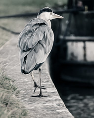 Take a Walk on The Wild Side (Dr Ewan) Tags: heron canal nikon barge grandunioncanal d800 walkonthewildside marsworth drewan nikond800