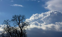 bring on the clouds (peet-astn) Tags: blue sky tree weather clouds spring