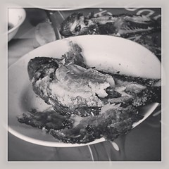 ปลาหมอเผาเกลือ