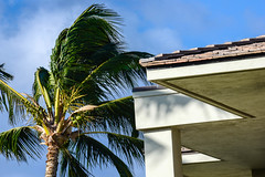 Palm Tree and Building (Eric W_) Tags: vacation building hawaii places palmtree bigisland waikaloavista hawaii2013