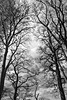 trees (Ray Byrne) Tags: trees blackandwhite bw monotone northumberland northeast raybyrne byrneoutcouk webnorthcouk