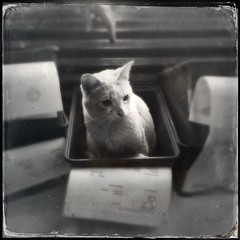 Tinker in a box... (Chris Blakeley) Tags: seattle abbey cat kitten tinker hipstamatic