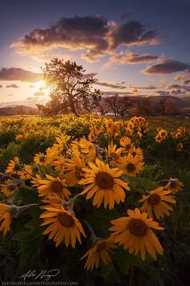Sun Grove