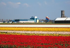 Lines of Holland (Maria_Globetrotter) Tags: travel flowers plant flower holland tourism netherlands windmill dutch yellow architecture canon wonderful landscape design spring big perfect colorful europe day factory colours power tulips cloudy postcard nederland landmark visit plantation tulip stunning limestone huge fields flowering typical gigantic bomb blommor majestic iconic paysbas pases bloemen gul perennial tulipa  keukenhof tulipe holand vr lightroom bloem bonanza tulp tulipes tulipanes   bajos hillegom nederlnderna 650d 1585  mariaglobetrotter
