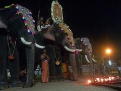 koodalmanikyam utsavam 2013 shiveli15 (koodalmanikyam-utsavam) Tags: elephant utsavam irinjalakuda koodalmanikyam irinjalakudautsavam shiveli koodalmanikyamtemple koodalmanikyamutsavam2013 koodalmanikyamutsavamphotos