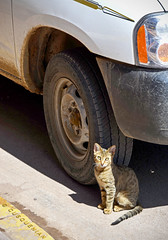 Díscolo minino (CUSQUENIAN) Tags: auto cat calle cusco gato coche carro rueda ramiro pista michi camioneta llanta tierno gatuno portilla discolo moreyra cusquenian ramiromoreyraportilla ramiromoreyra