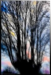 Tillykke Thomas ! (outdoorstudio) Tags: denmark spring skandinavien tr scandinavia trae danmark springtime vaar vr forr snderjylland knudshoved foraar loejtland ljtland soenderjylland southerndenmark knudshovedstien dagcenterforhandicappede stynettrae stynettr