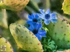 Contradictions - Painted Flowers 7 (Psycho_Babble) Tags: flowers blue cactus photomanipulation painted dukegardens digitalmanipulation