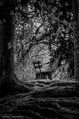 Tranquility (Burgerspace) Tags: trees bw white black tree nature bench landscape tranquility canonef28135mmf3556isusm canonef28135is