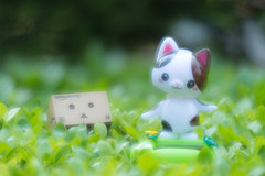 Danbo has fallen love with cute kitty (Takashi(aes256)) Tags: green cat toy solar leaf romantic   multiexposure  danbo     solarswing