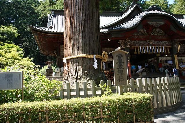 ご立派な杉の木が本殿前に対になって立ってます。|北口本宮富士浅間神社