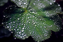 Show me Droplets! (Arnekkersphoto) Tags: world new pink light plant flower green nature water rain canon insect eos rebel leaf kiss waterdrop little rosa drop lila droplet grn blume raining blatt tropfen regentropfen unschrfe fliyng 550d