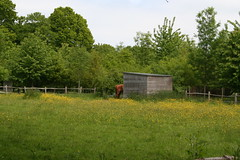 Half a horse, half a horse, my kingdom for half a horse (ART NAHPRO) Tags: life england rural sussex country may meadows fields buttercups etchingham 2013