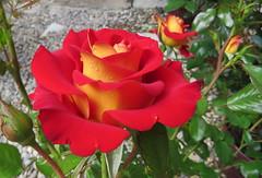 Marseillle 406 (molaire2) Tags: orange saint rose marseille theatre antique arc triomphe pont palais provence notre dame avignon garde ardeche darc grotte papes aven vallon orgnac benezet chauvet