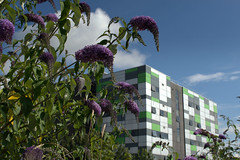 UCLan Media Building and Summer Colour - 2 (Tony Worrall) Tags: preston north northwest lancs lancashire england northern uk update place location visit area county attraction open stream tour country welovethenorth unitedkingdom summer weeds colour flowers bush urbannature prestonnature mediabuilding architecture uclan university block leggo made modern teach students meet outdoors teaching